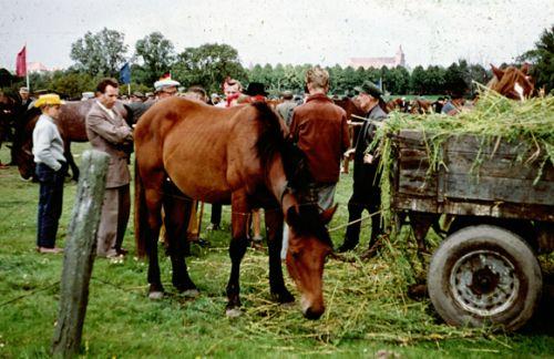 Pferde und frauen